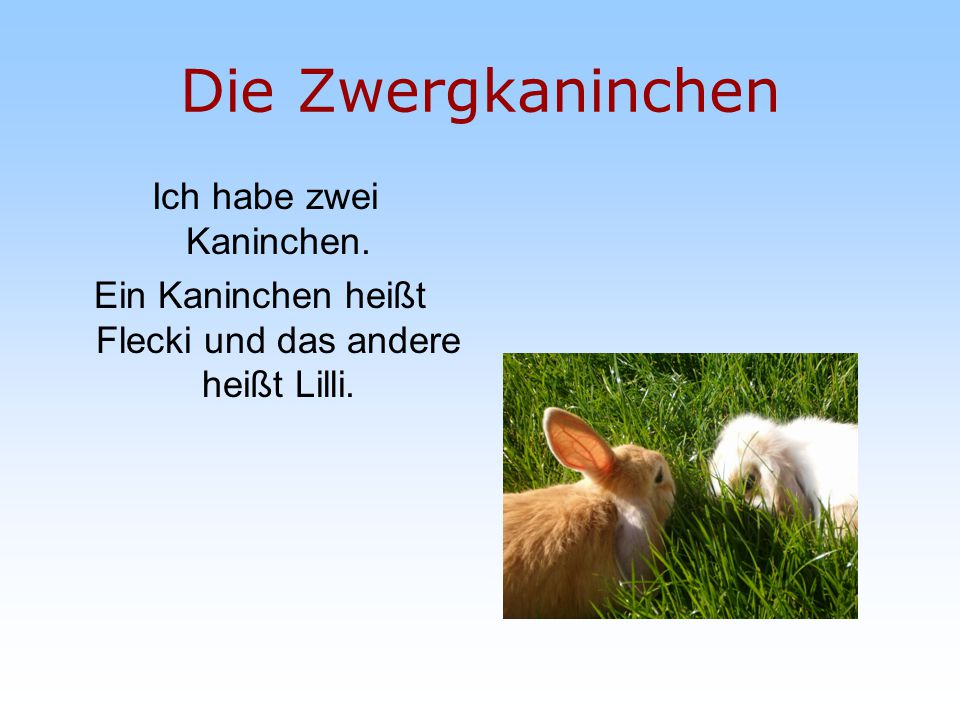 Die Zwergkaninchen Ich habe zwei Kaninchen.