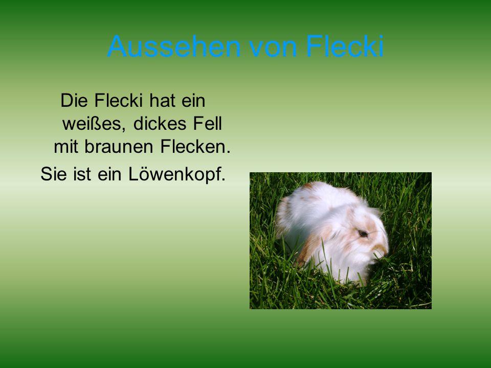 Die Flecki hat ein weißes, dickes Fell mit braunen Flecken.