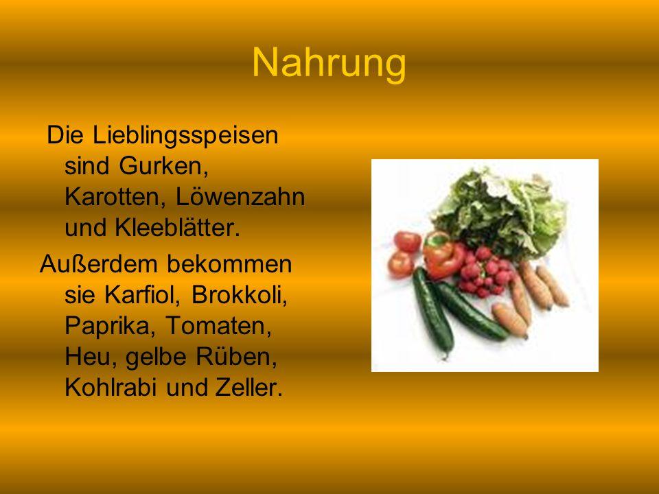 Nahrung Die Lieblingsspeisen sind Gurken, Karotten, Löwenzahn und Kleeblätter.