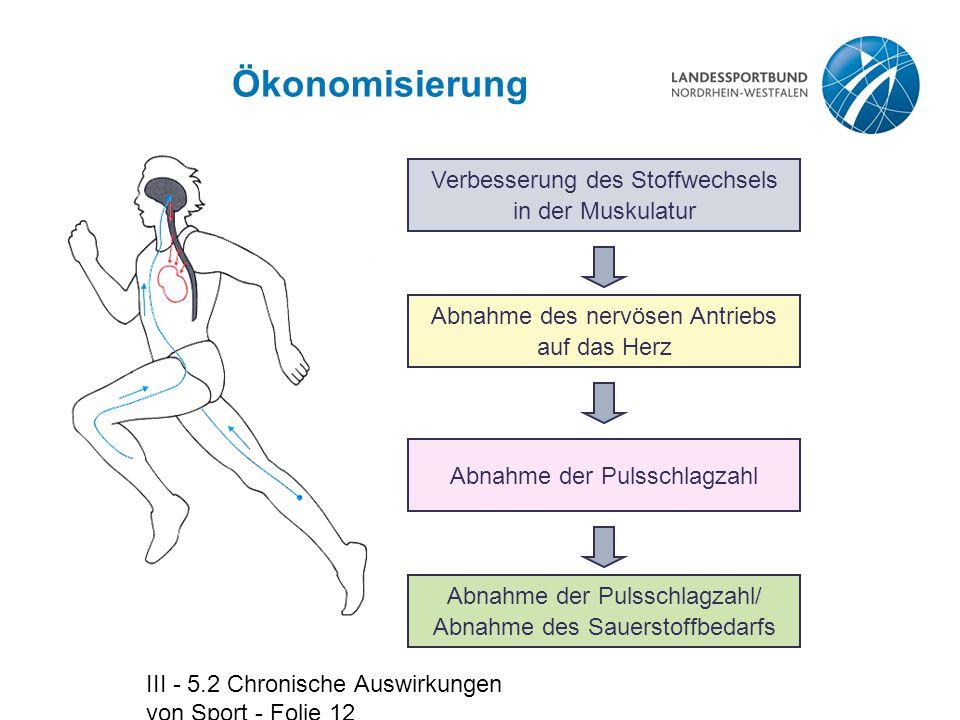 Ökonomisierung Verbesserung des Stoffwechsels in der Muskulatur