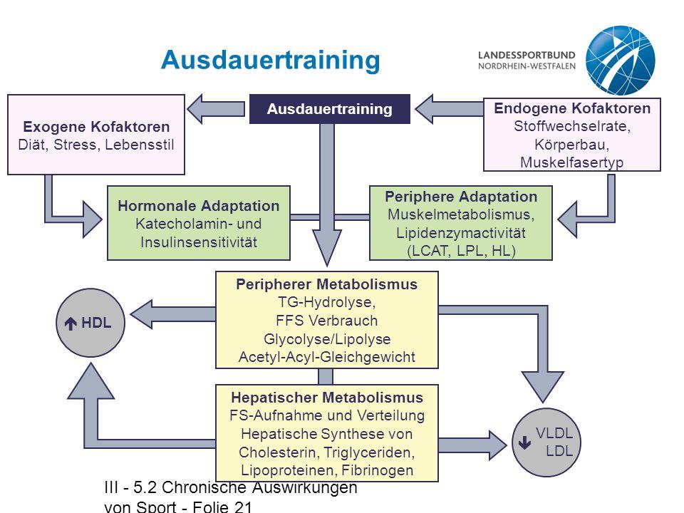 Peripherer Metabolismus Hepatischer Metabolismus