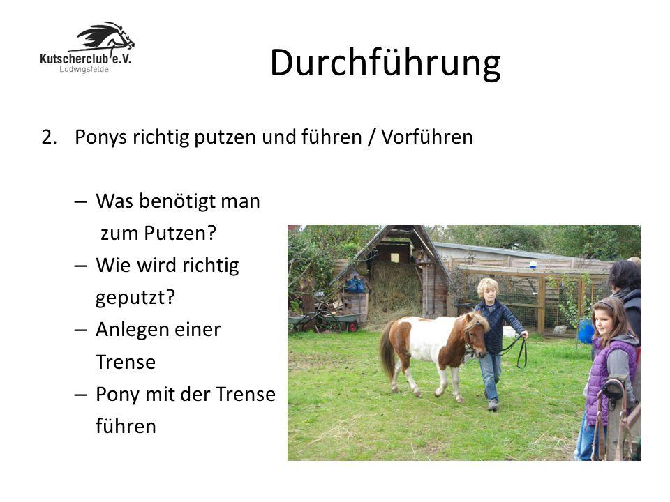 Durchführung Ponys richtig putzen und führen / Vorführen