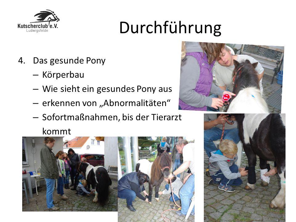 Durchführung Das gesunde Pony Körperbau
