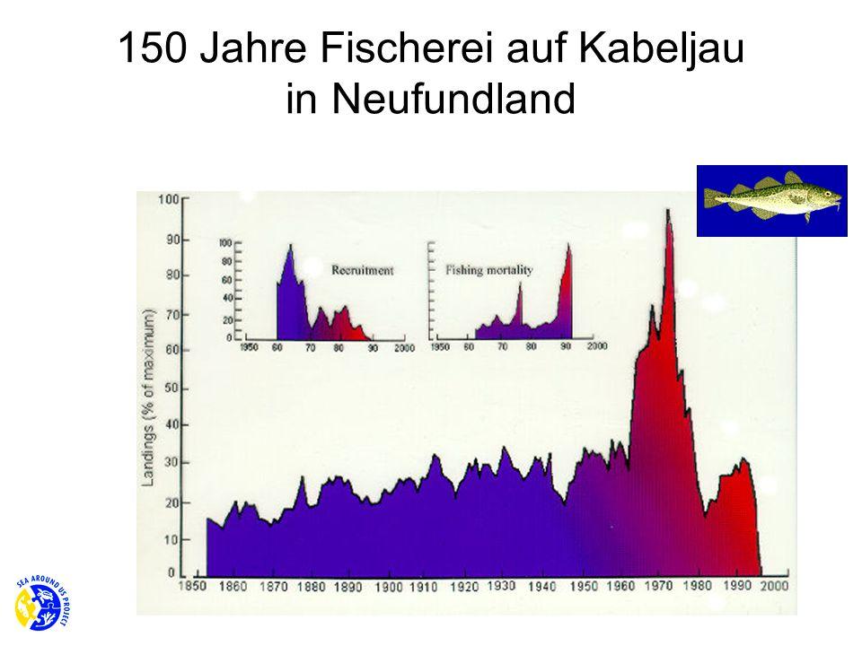150 Jahre Fischerei auf Kabeljau in Neufundland