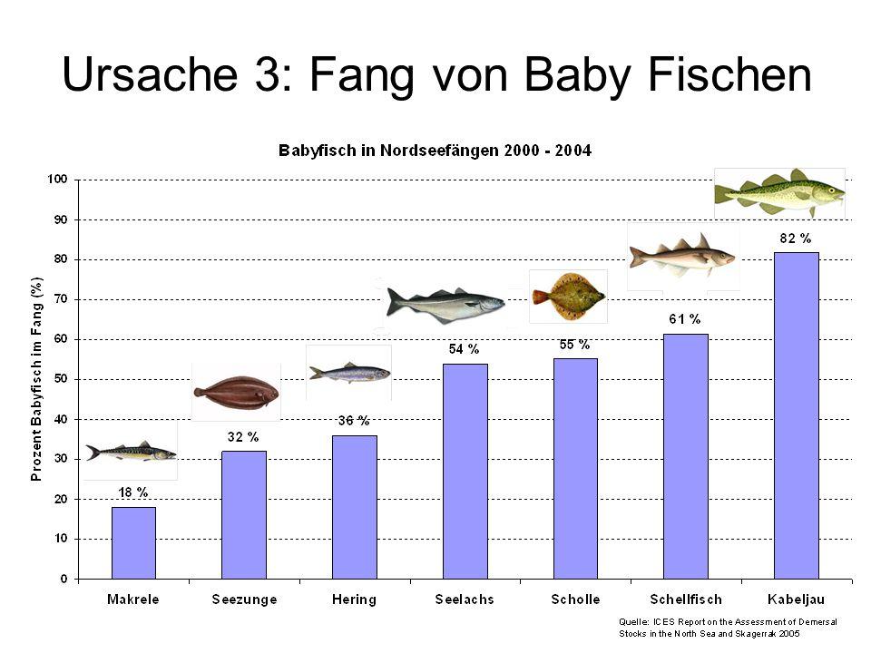 Ursache 3: Fang von Baby Fischen