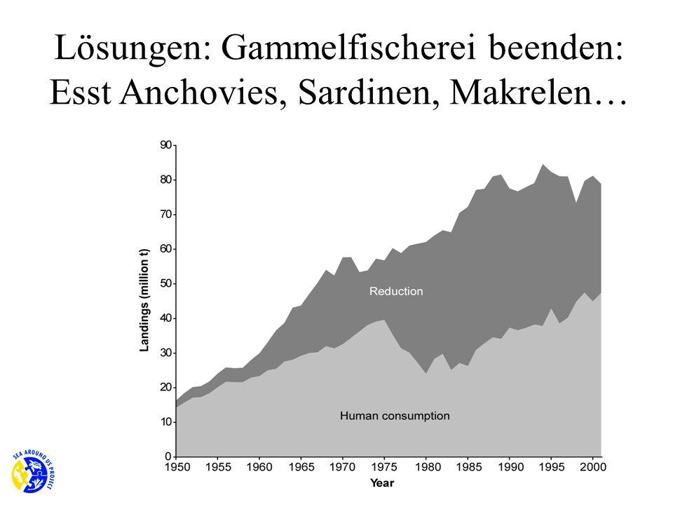 Lösungen: Gammelfischerei beenden: Esst Anchovies, Sardinen, Makrelen…