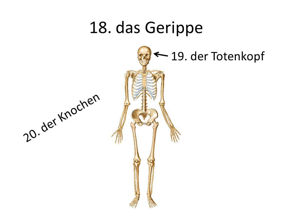18. das Gerippe 19. der Totenkopf 20. der Knochen