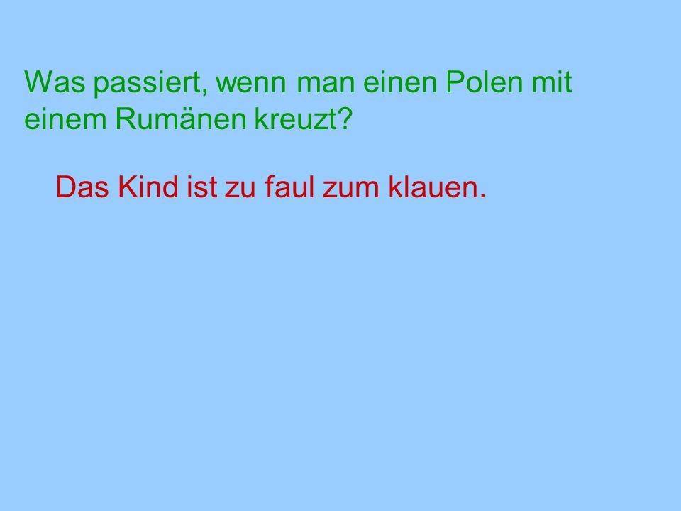 Was passiert, wenn man einen Polen mit einem Rumänen kreuzt