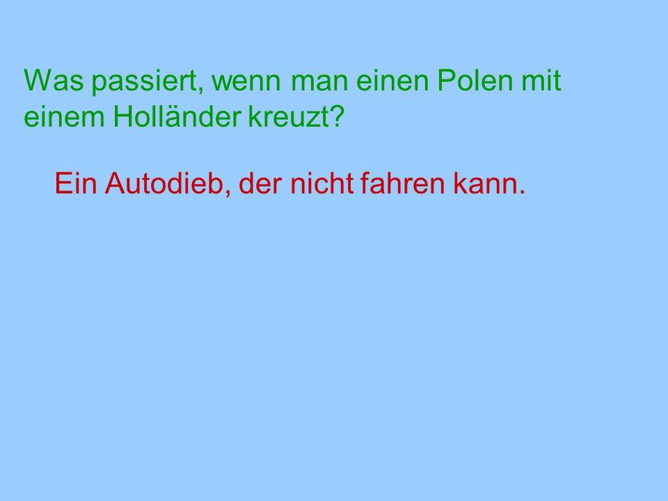 Was passiert, wenn man einen Polen mit einem Holländer kreuzt