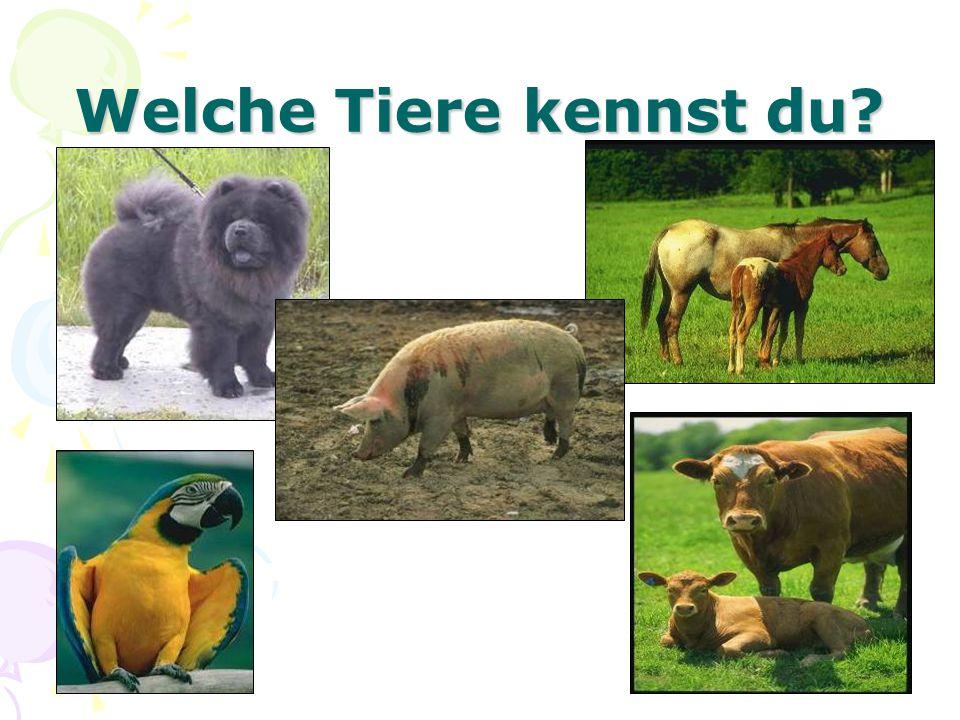 Welche Tiere kennst du