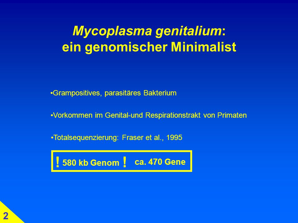 Mycoplasma genitalium: ein genomischer Minimalist