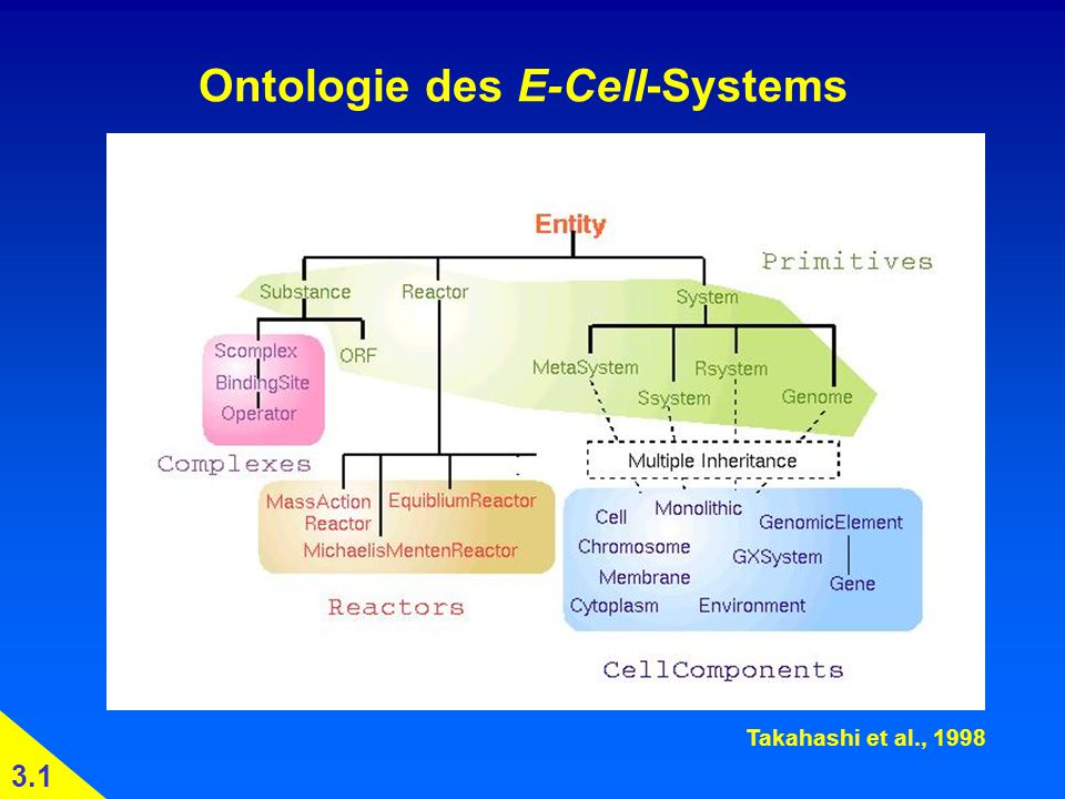 Ontologie des E-Cell-Systems