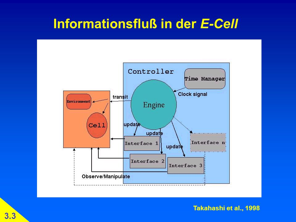 Informationsfluß in der E-Cell