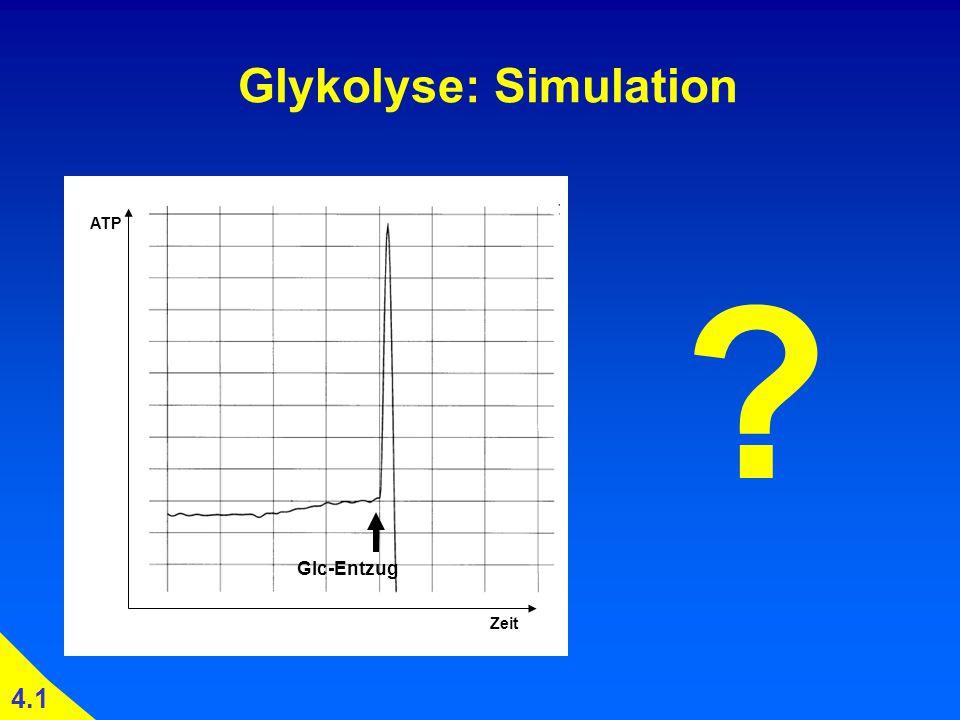 Glykolyse: Simulation