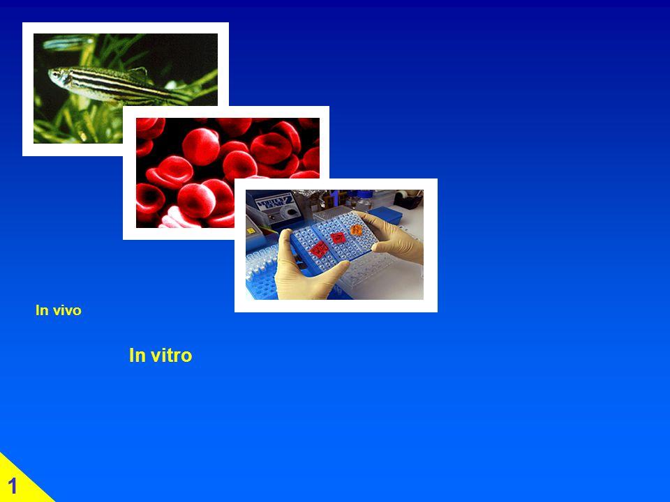 1 1 In vivo In vitro 1