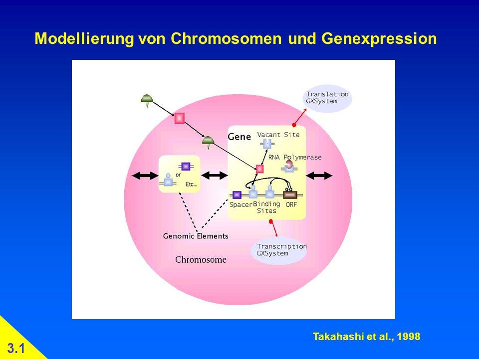 Modellierung von Chromosomen und Genexpression