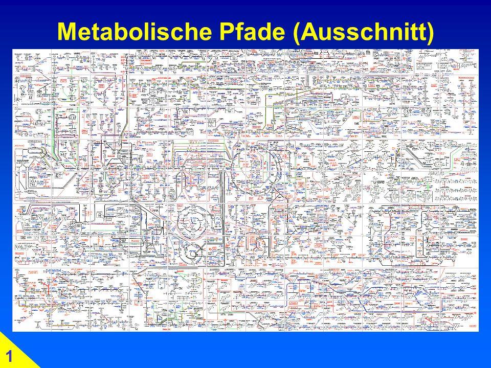 Metabolische Pfade (Ausschnitt)