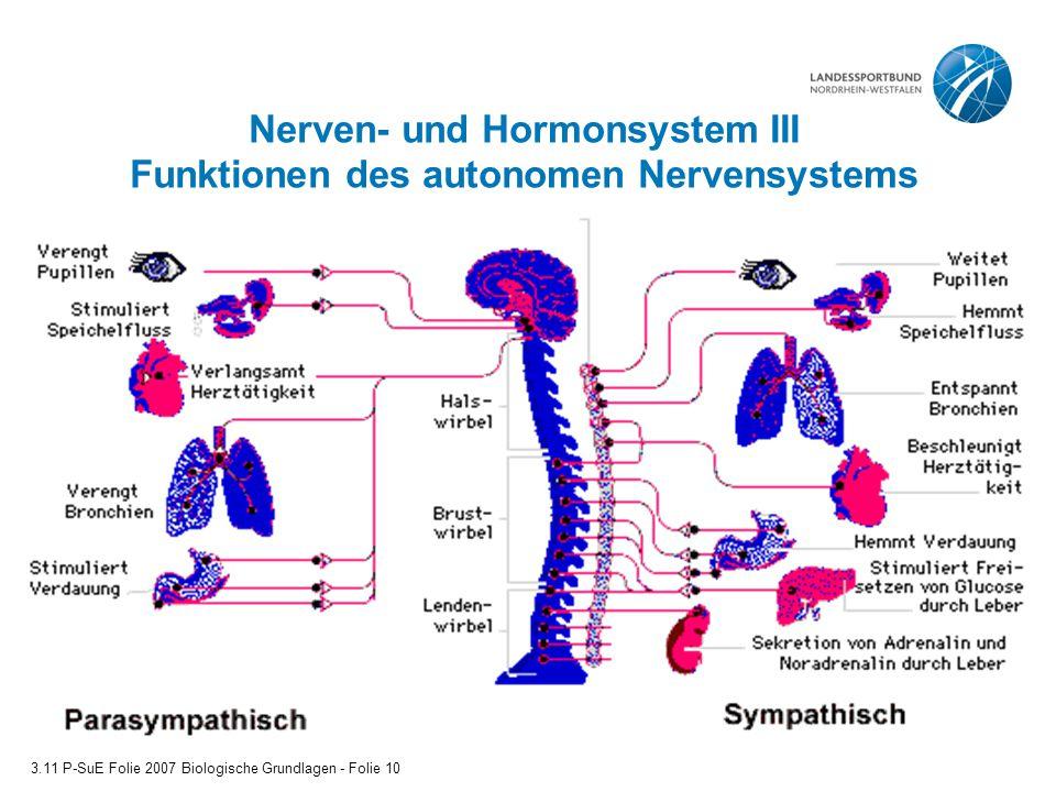 Nerven- und Hormonsystem III Funktionen des autonomen Nervensystems