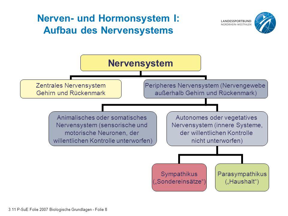 Nerven- und Hormonsystem I: Aufbau des Nervensystems