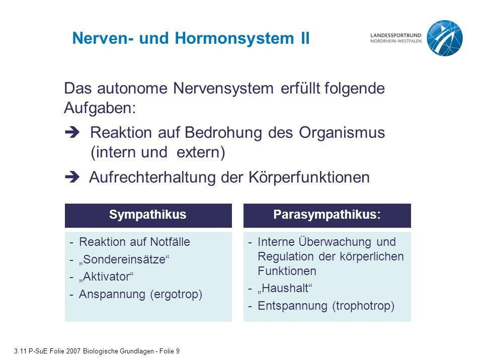 Nerven- und Hormonsystem II