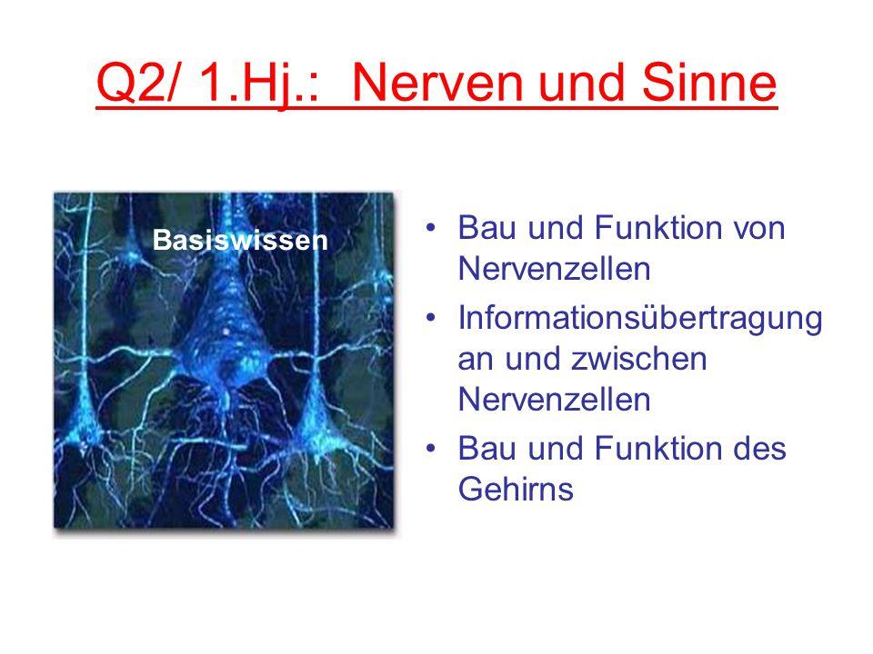 Q2/ 1.Hj.: Nerven und Sinne Bau und Funktion von Nervenzellen
