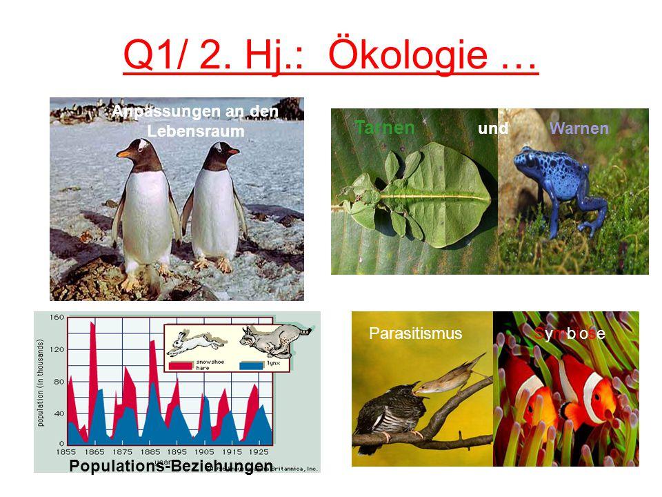 Anpassungen an den Lebensraum Populations-Beziehungen