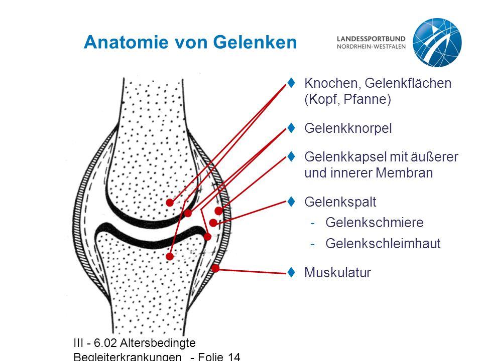 Groß Anatomie Und Physiologie Gelenke Galerie - Menschliche Anatomie ...
