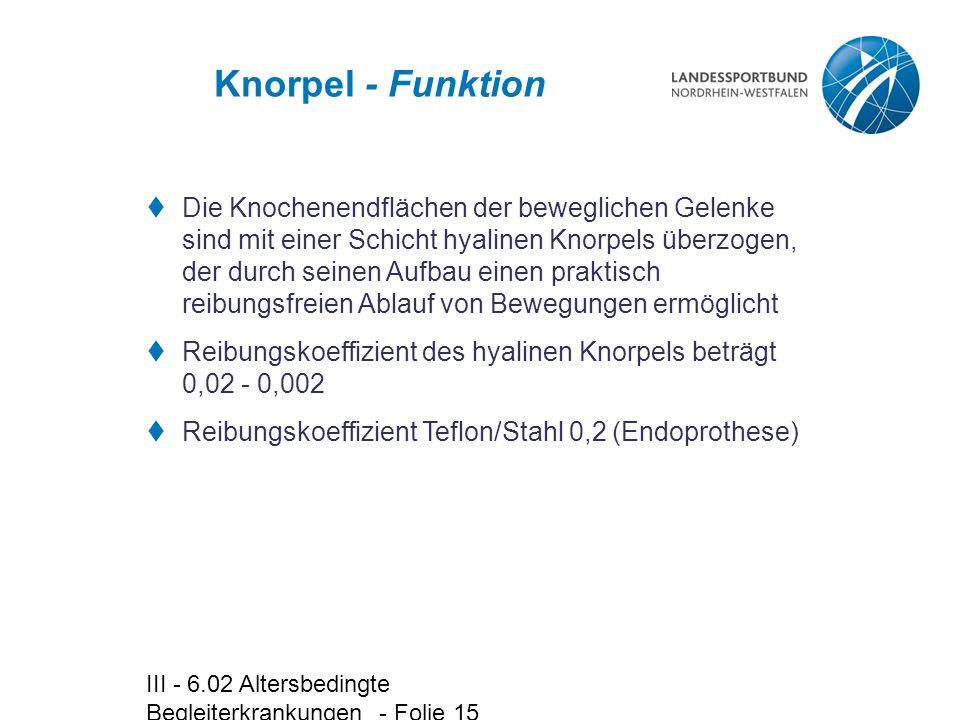 Knorpel - Funktion