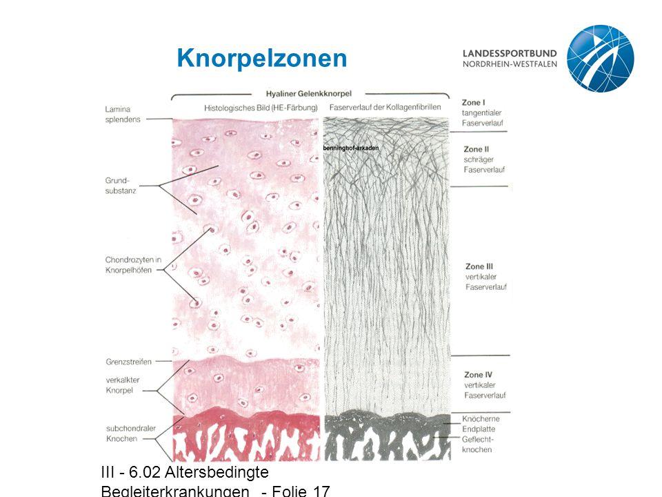 Knorpelzonen III - 6.02 Altersbedingte Begleiterkrankungen - Folie 17