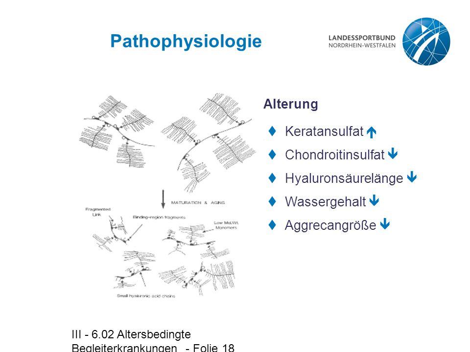 Pathophysiologie Alterung Keratansulfat  Chondroitinsulfat 