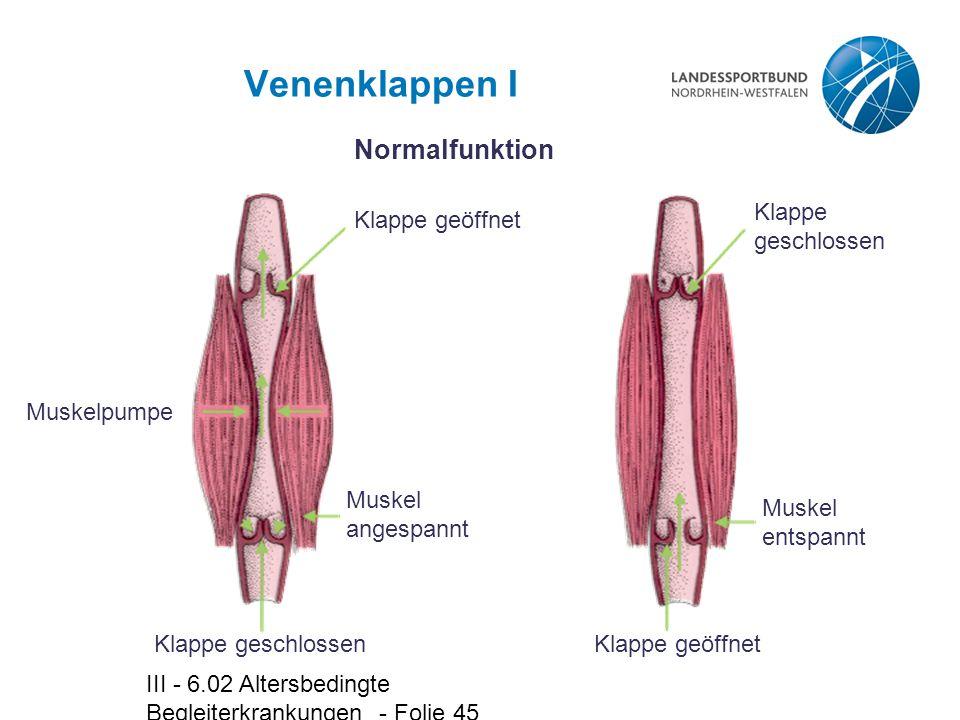 Venenklappen I Normalfunktion Muskelpumpe Klappe geschlossen