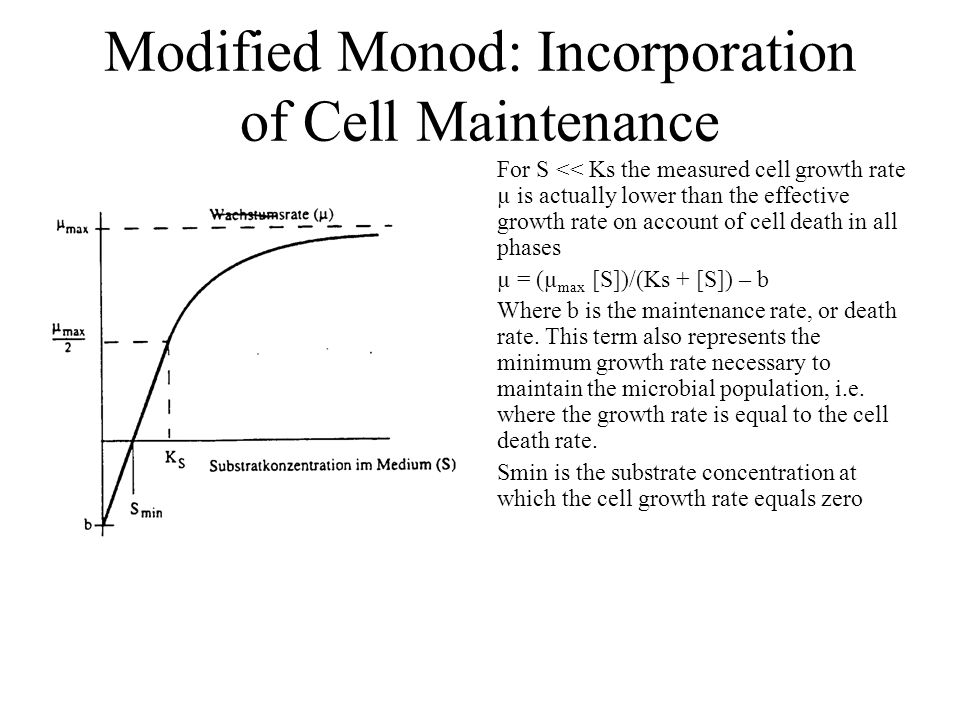 Modified Monod: Incorporation of Cell Maintenance