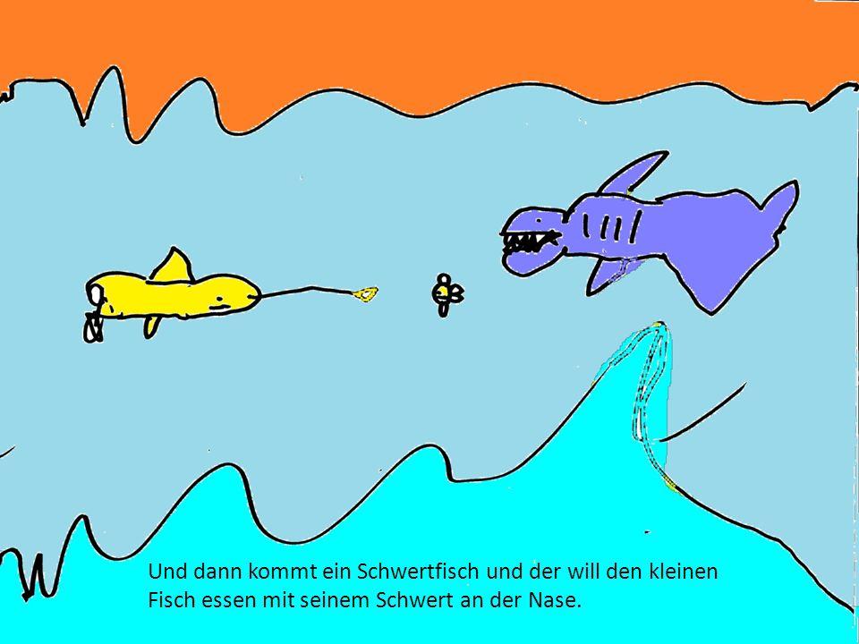 Und dann kommt ein Schwertfisch und der will den kleinen Fisch essen mit seinem Schwert an der Nase.