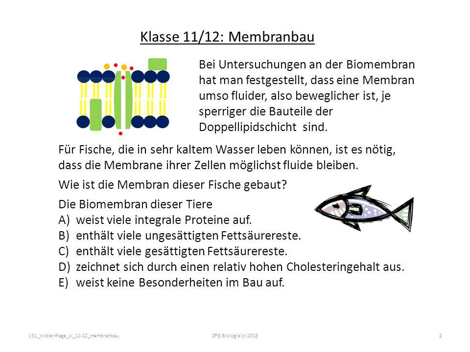 Klasse 11/12: Membranbau