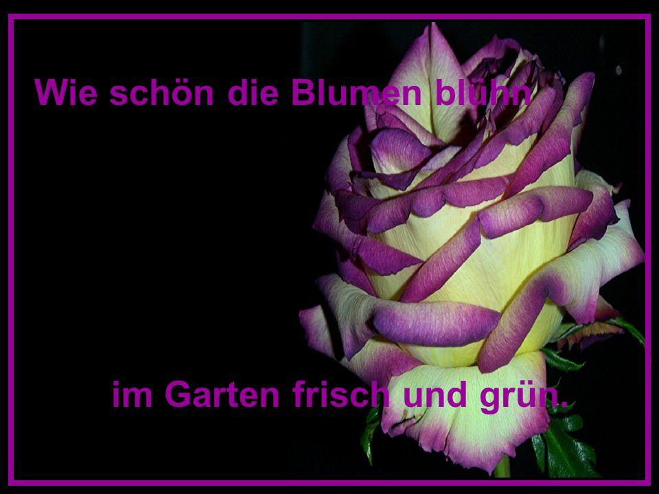Wie schön die Blumen blühn