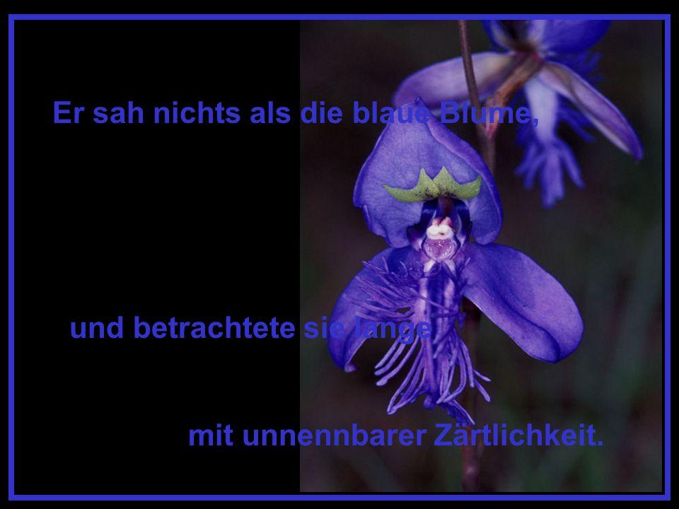 Er sah nichts als die blaue Blume,