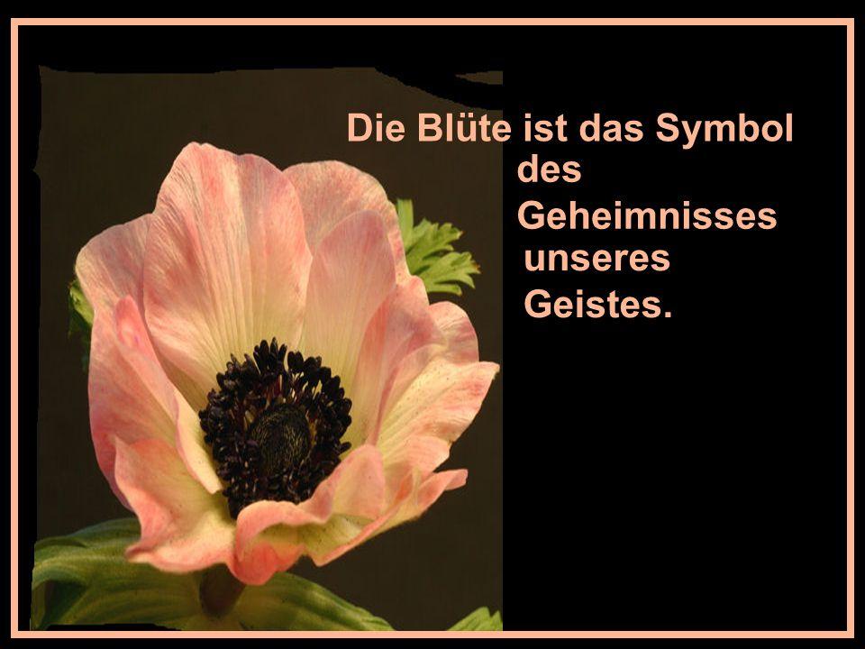 Die Blüte ist das Symbol
