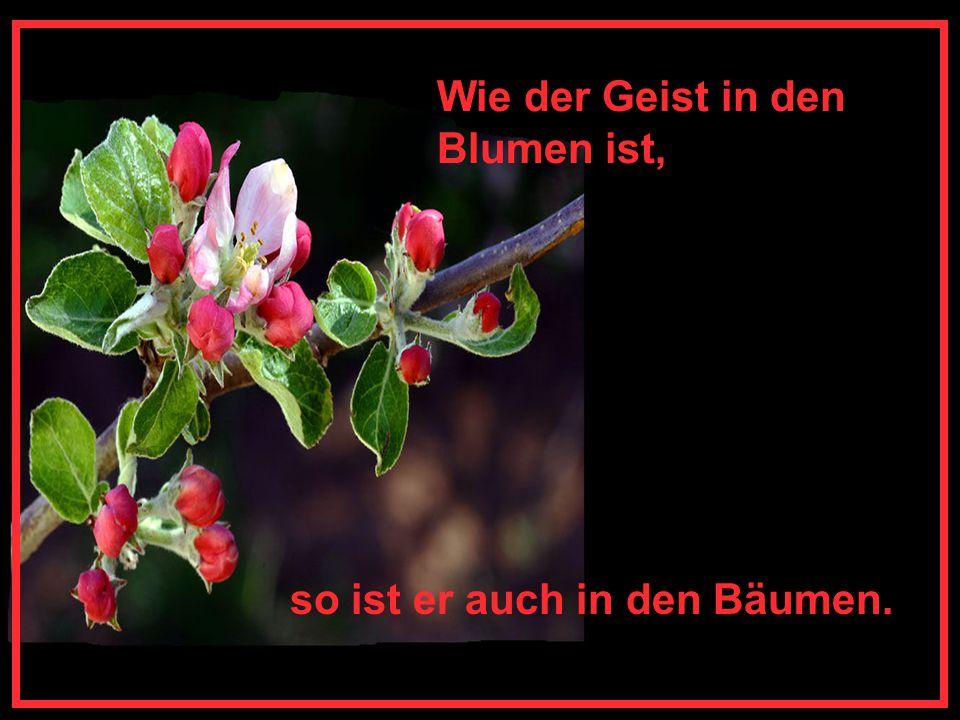 Wie der Geist in den Blumen ist,