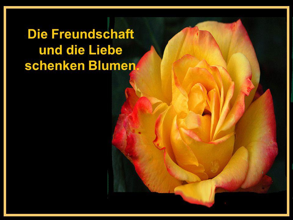 Die Freundschaft und die Liebe schenken Blumen.