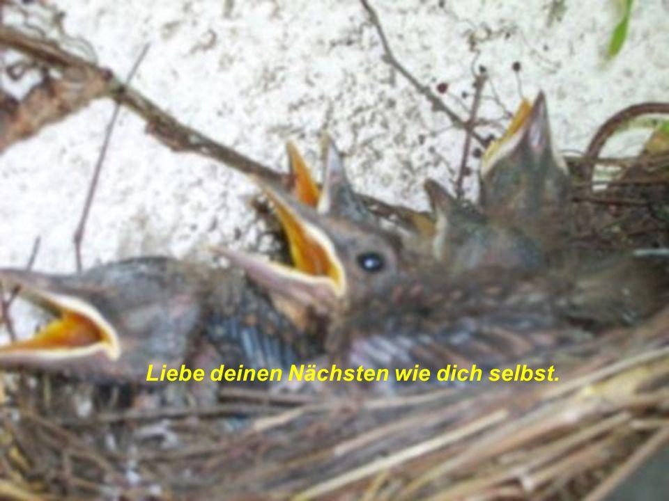verteilt durch www.funmail2u.de Liebe deinen Nächsten wie dich selbst.