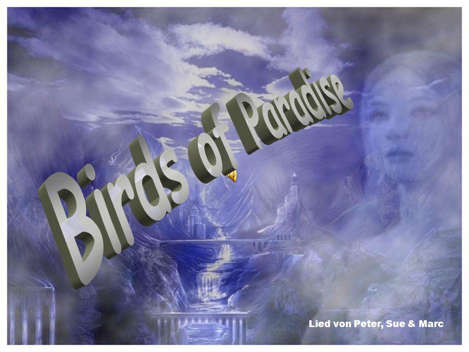 Birds of Paradise Lied von Peter, Sue & Marc