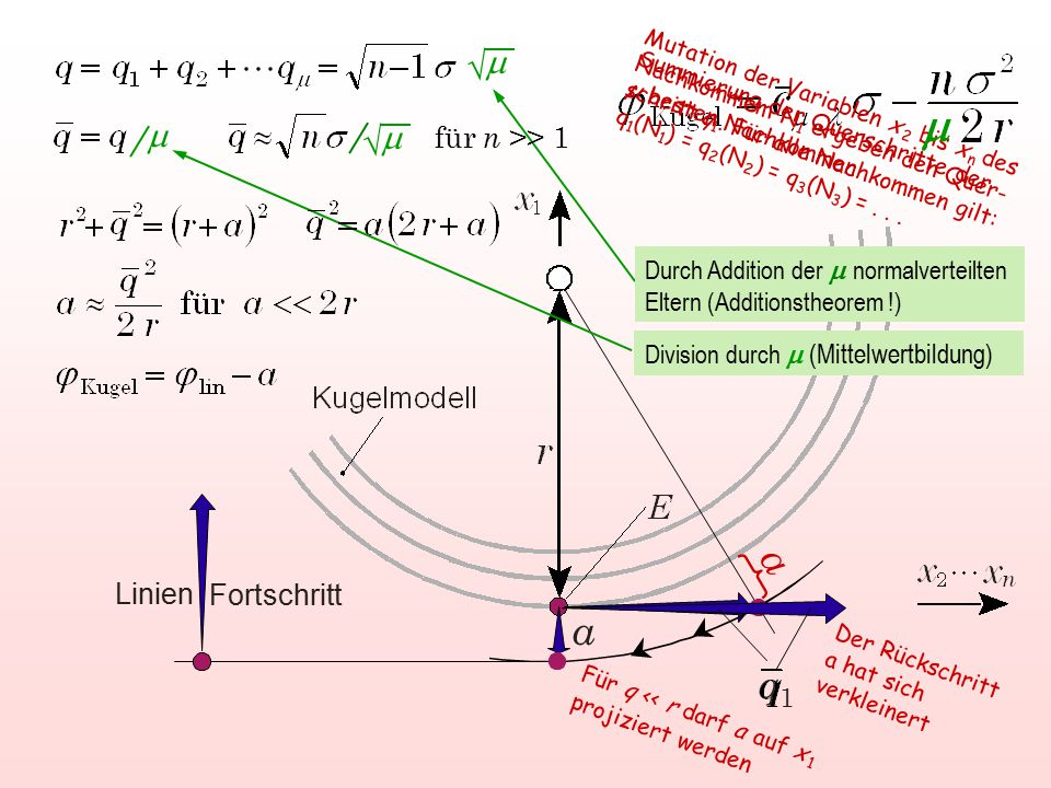 m a a q1 m  m m  für n >> 1 Linien Fortschritt