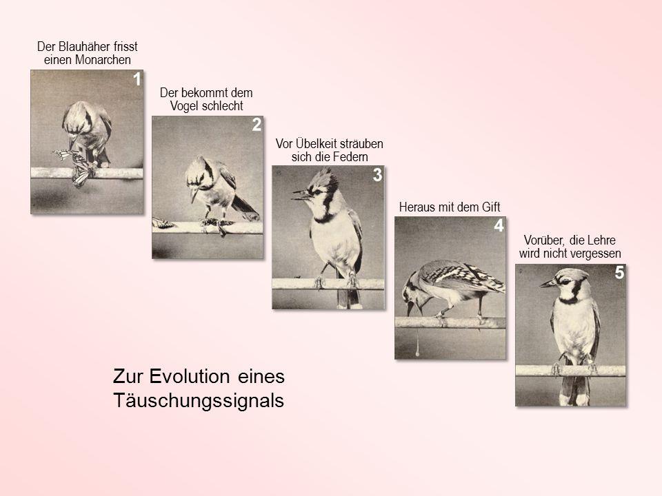 Zur Evolution eines Täuschungssignals