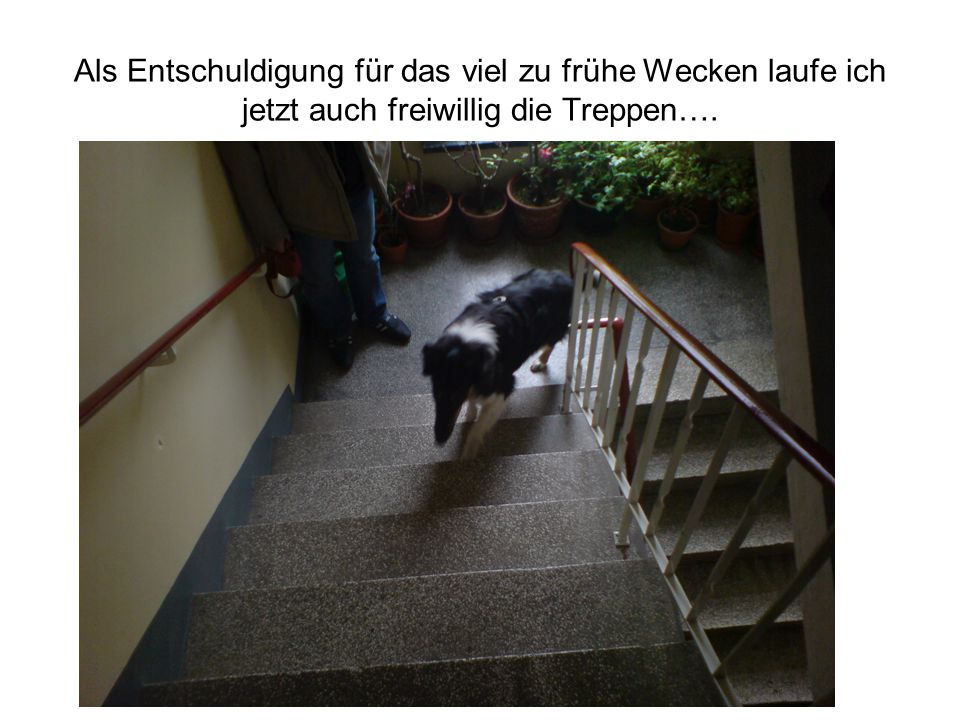 Als Entschuldigung für das viel zu frühe Wecken laufe ich jetzt auch freiwillig die Treppen….