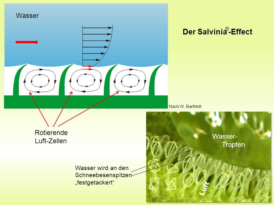 Der Salvinia -Effect Wasser Rotierende Luft-Zellen Wasser- Tropfen