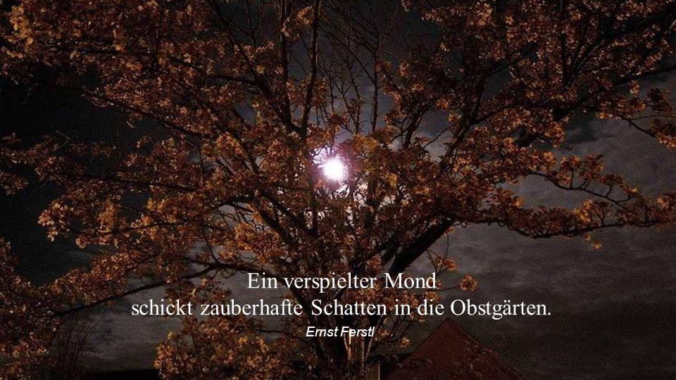 Ein verspielter Mond schickt zauberhafte Schatten in die Obstgärten.