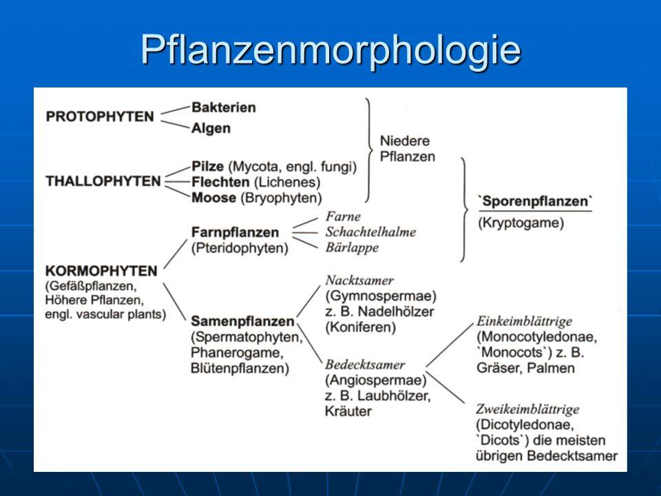 Pflanzenmorphologie