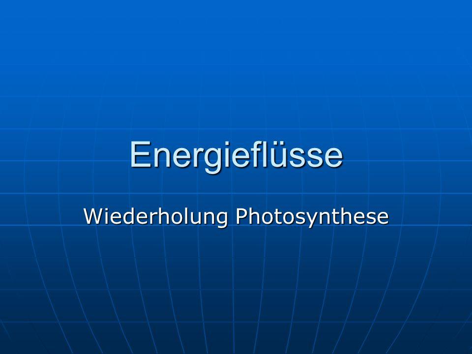 Wiederholung Photosynthese