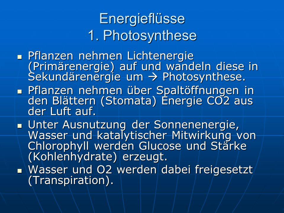Energieflüsse 1. Photosynthese