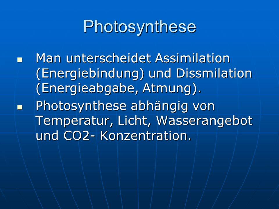 Photosynthese Man unterscheidet Assimilation (Energiebindung) und Dissmilation (Energieabgabe, Atmung).